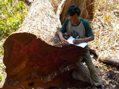16.7 Recording illegal logging -ranger chief of Kang Nork